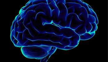 Un déficit en acides gras oméga-3 à partir de l'adolescence menace l'équilibre psychique