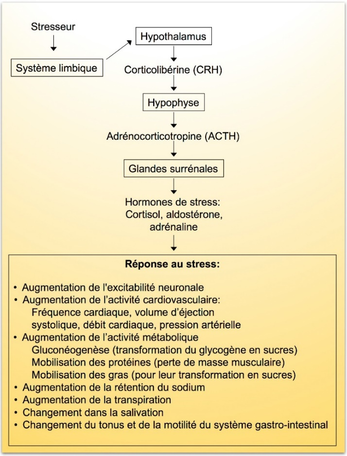 http://observatoireprevention.org/wp-content/uploads/2017/08/Reponse_physiologique_au_stress.jpg