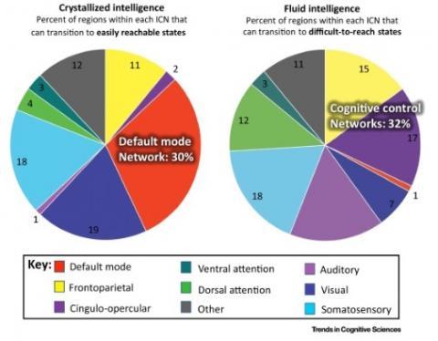 Crystallised intelligence et Fluid intelligence.