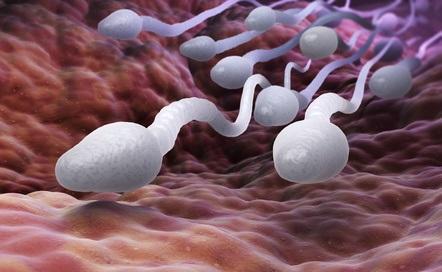 Une carence en taurine dans le sperme pourrait provoquer l'infertilité masculine