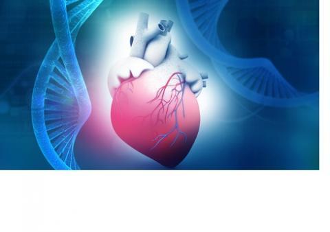 Ces chercheurs identifient 30 loci génétiques qui influent sur la réponse cardiaque à l'effort