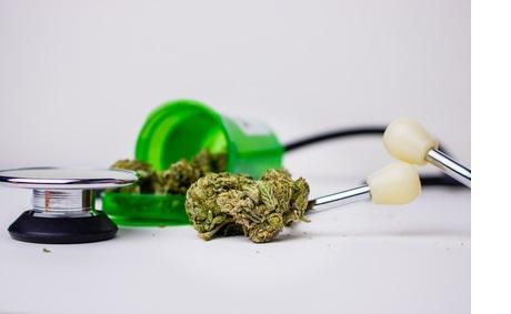 La présence de THC, le principal composant psychoactif du cannabis, est constatée dans 63% des échantillons de lait maternel jusqu'à 6 jours après la dernière utilisation déclarée par la mère.