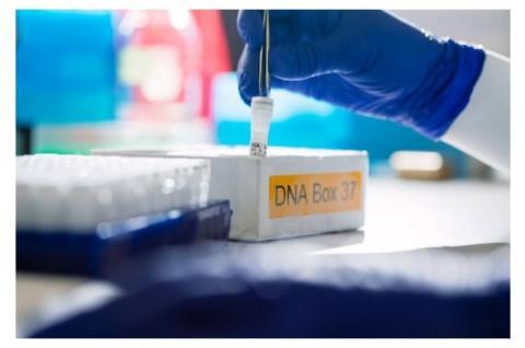 Découverte d'indicateurs présents dans certains cas de cancers de la prostate à faible risque prédictifs de cancers à risques intermédiaire et élevé.