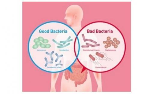Mais quels sont les secrets d'un super microbiote et d'un « super-donneur » ?