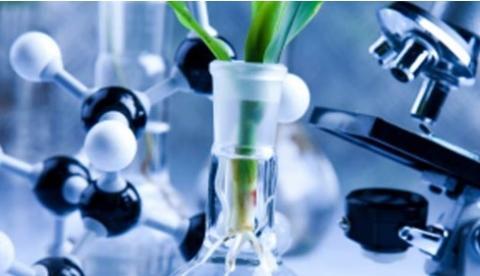 L'analyse des séquences génétiques de 9 souches de cannabis vient de permettre de découvrir des réseaux de gènes distincts orchestrant la production de résines de cannabinoïdes et de terpènes pour chaque souche, ainsi que les composés volatils qui font le puissant arôme de la plante.