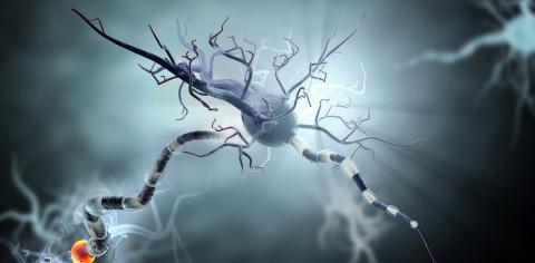 Des interneurones inhibiteurs, des cellules capables d'atténuer l'excitation des zones du cerveau et d'exercer ainsi une fonction de freinage, ne fonctionnent plus chez les patients épileptiques