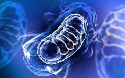 Découverte d'un processus épigénétique, impactant la respiration cellulaire, et susceptible de déclencher des troubles liés à l'âge