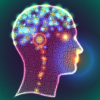L'entropie pendant la conscience est plus élevée que pendant les états inconscients.