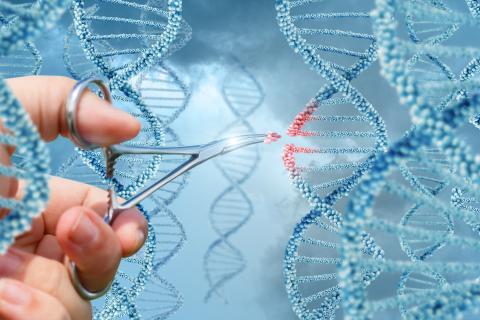 La technique d'édition du génome ouvre un grand espoir dans le traitement de la maladie.