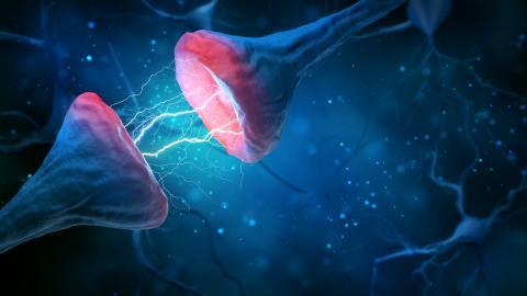 Une enzyme clé s'avère essentielle pour réparer les dommages à l'ADN des gènes impliqués dans la mémoire et la plasticité cérébrale (Visuel AdobeStock_287514101)