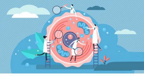 Au-delà d'empêcher la prise de poids, la protéine BAM15 brûleuse de graisses, élimine le risque de trouble métabolique (Visuel AdobeStock_283500641)