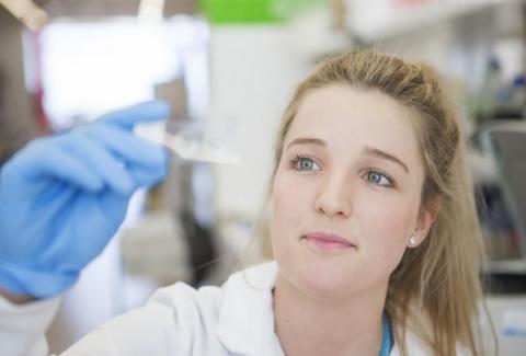 L'auteur principal, le Dr Ciara Duffy souhaitait se concentrer sur les propriétés anticancéreuses d'un composant spécifique du venin d'abeille, la mélittine, sur différents types de cellules cancéreuses du sein (Visuel Harry Perkins Institute of Medical Research).