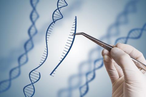Imiter l'effet de l'exercice avec une thérapie génique, c'est possible (Visuel Adobe Stock 172051468)
