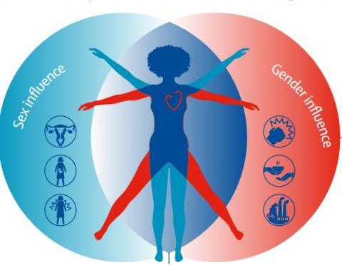 Ces experts appellent à travailler de manière urgente à réduire le fardeau mondial des maladies cardiovasculaires chez les femmes (Visuel The Lancet)