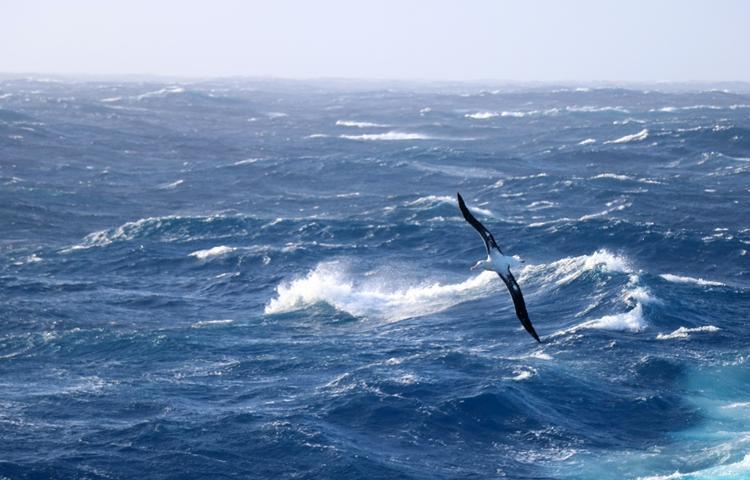 L'océan Austral a été délimité par la National geographic society autour du 60eparallèle. (Photo: Daphné Buiron)