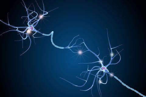 Ce bruit de fond du cerveau n'est pas superflu ou dommageable, au contraire, il  joue un rôle clé, il permet le maintien des connexions nerveuses (Adobe Stock 224474654)