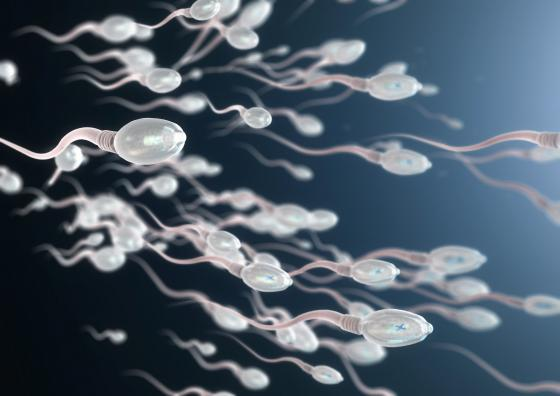 des spermatozoïdes affectés par le virus de la COVID