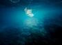 Une image contenant fond marin, ciel nocturne  Description générée automatiquement