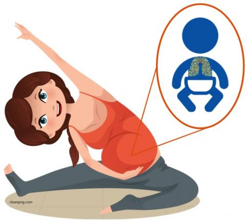 La fonction pulmonaire moyenne apparaît légèrement et significativement plus élevée chez les bébés de mères actives vs bébés de mères inactives (Illustration Dr Hrefna Katrin Gudmundsdottir)