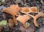 Une image contenant champignon, gril  Description générée automatiquement