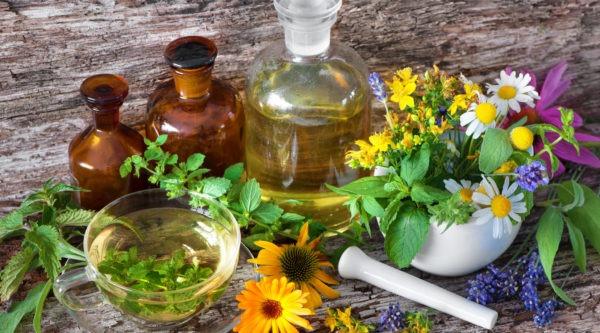 Une image contenant fleur, plante, frais  Description générée automatiquement