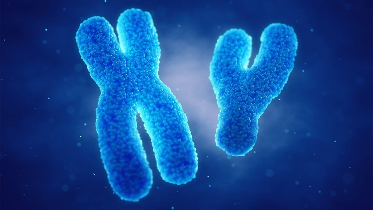 A computer rendering of X and Y chromosomes