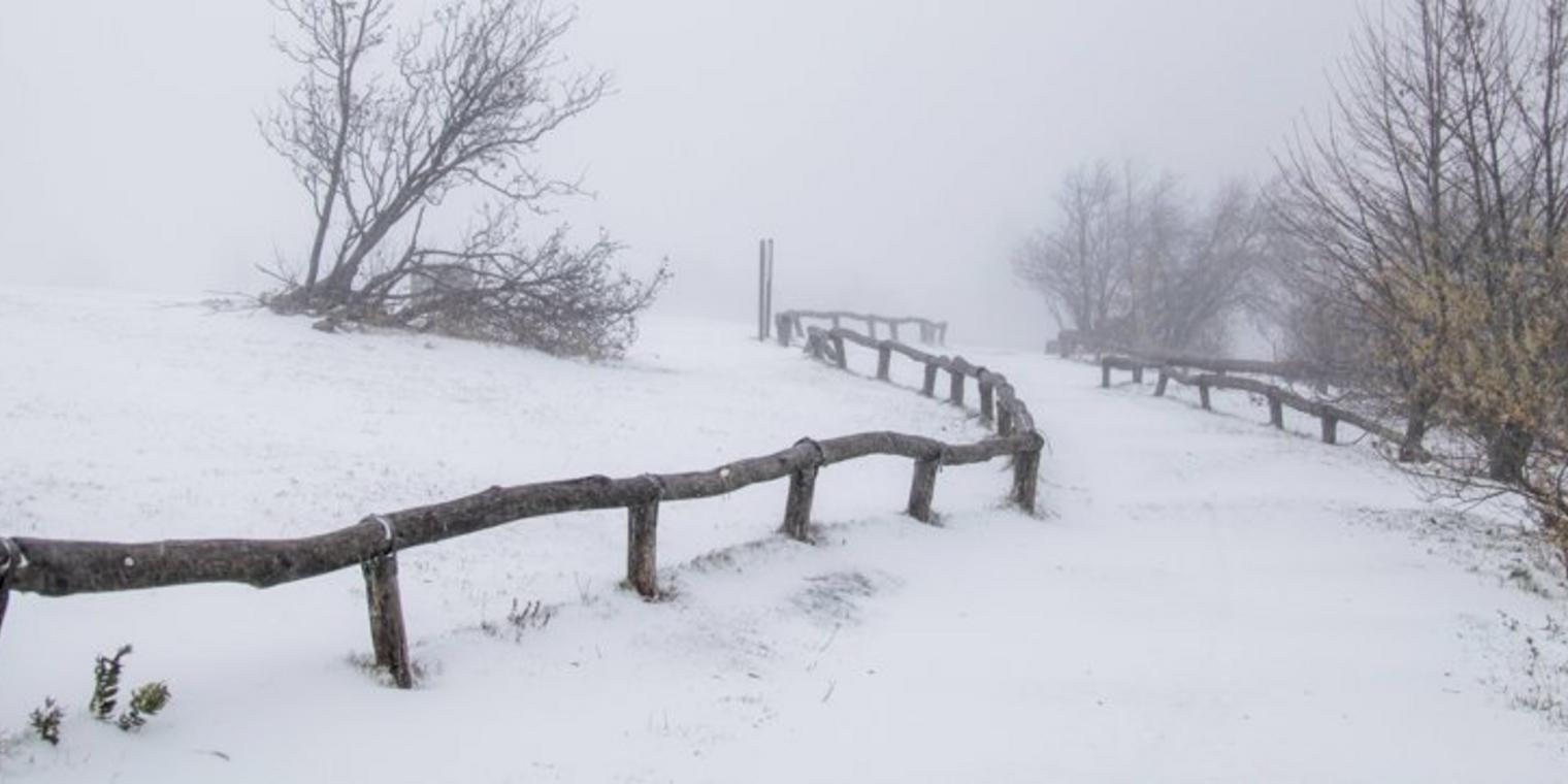 Une image contenant neige, extérieur, arbre, couvert  Description générée automatiquement